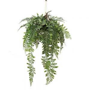 fern hanging 3 (Custom)